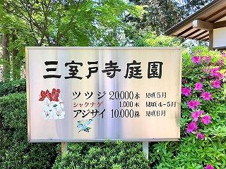 三室戸寺庭園 花の見頃の案内板