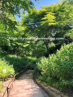 神戸布引ハーブ園 美しい新緑