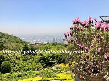 神戸布引ハーブ園の展望エリアから見える神戸の街とラベンダー