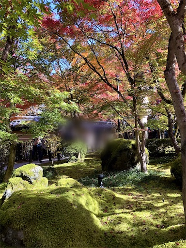青い苔も美しい永観堂の観光