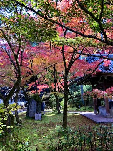 赤 黄 緑 光 黒い影の色が美しい秋の永観堂境内