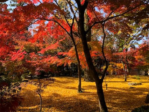 秋の永観堂で一番感動した景色