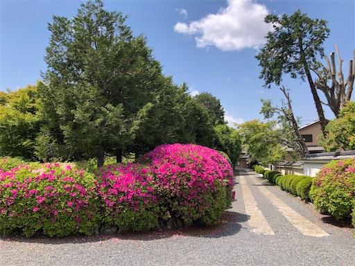 5月の随心院 ツツジの花がきれい