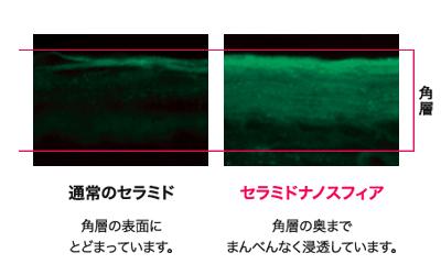 敏感肌コスメ・ディセンシア・セラミド