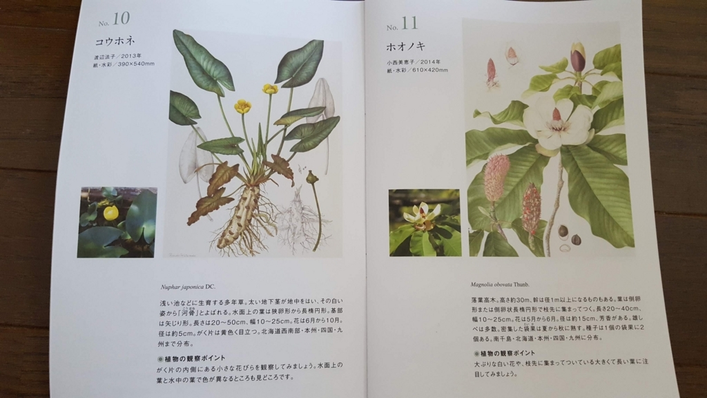 英国キュー王立植物園収蔵画とFlora Japonica
