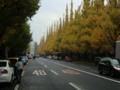 神宮 いちょう並木