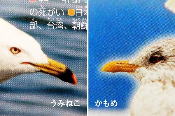 f:id:cotosumu:20190224234625j:plain