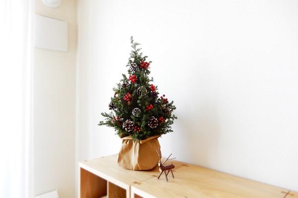 ヒロム杉でクリスマスツリー