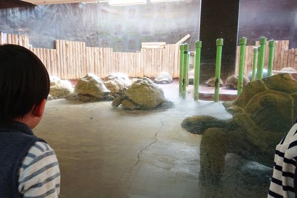 日本最大のゾウガメ繁殖施設