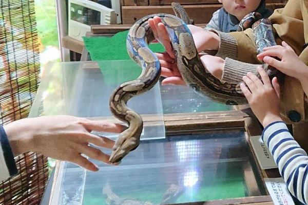 iZooで爬虫類と触れ合い体験