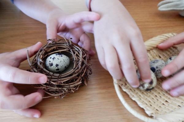 鳥の巣とうずらの卵であそぶ子供たち