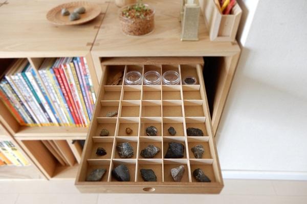 子供のコレクションケースにセミの抜け殻を保管