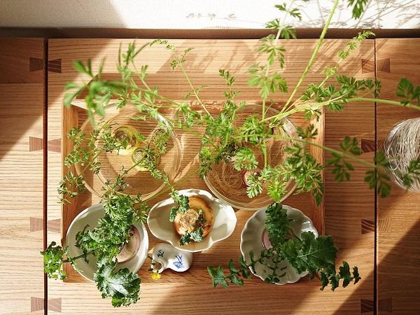子どもの植物観察コーナー