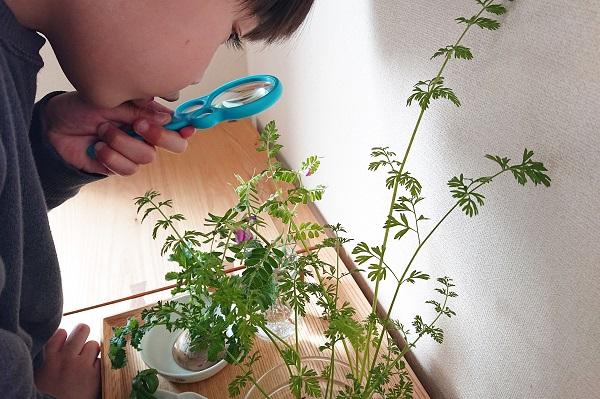 植物観察コーナー