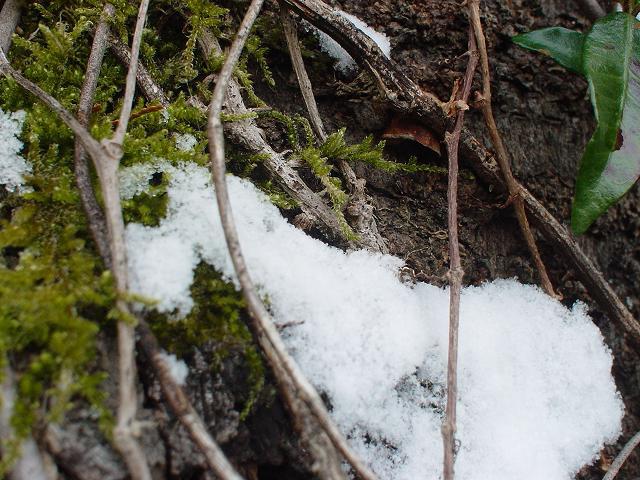 f:id:cotton1010:20100101103750j:image:w320,h240