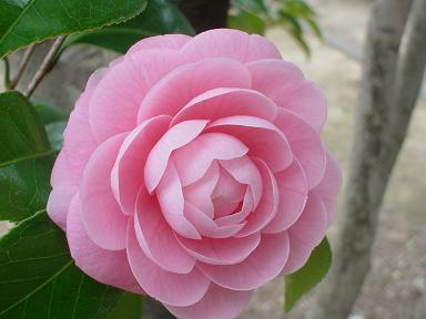 f:id:cotton1010:20100313112839j:image:w320,h240