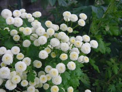 f:id:cotton1010:20100619154614j:image:w160,h120