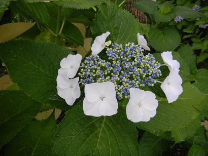 f:id:cotton1010:20100619164346j:image:w320,h240