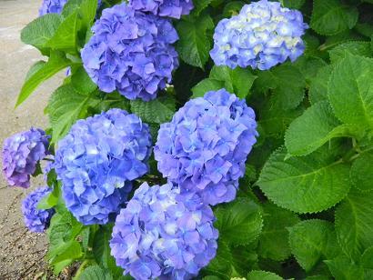 f:id:cotton1010:20100619164447j:image:w320,h240