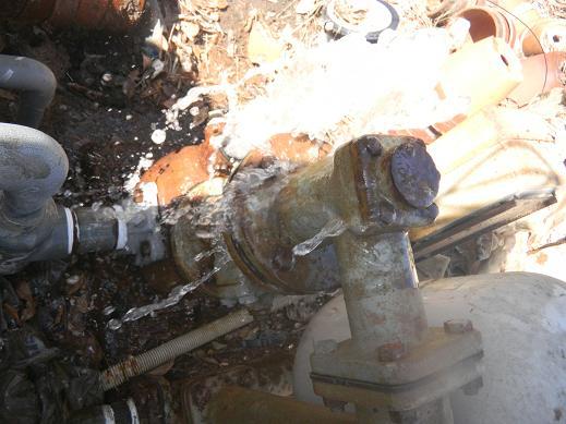 f:id:cotton1010:20110717084857j:image:w360