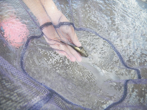 f:id:cotton1010:20120812110658j:image:w360