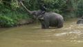木の枝を食べる象