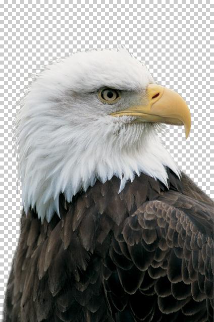f:id:css_design:20100829185411j:image