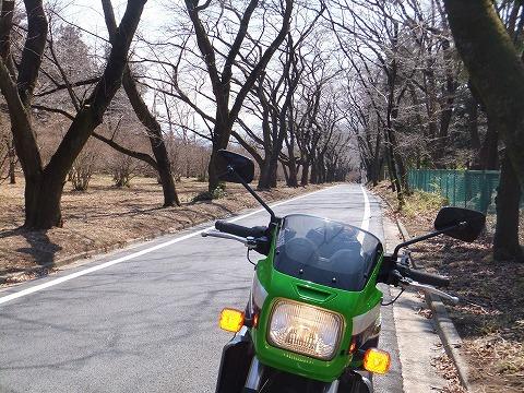 k27千本桜