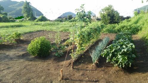 soil11.jpg