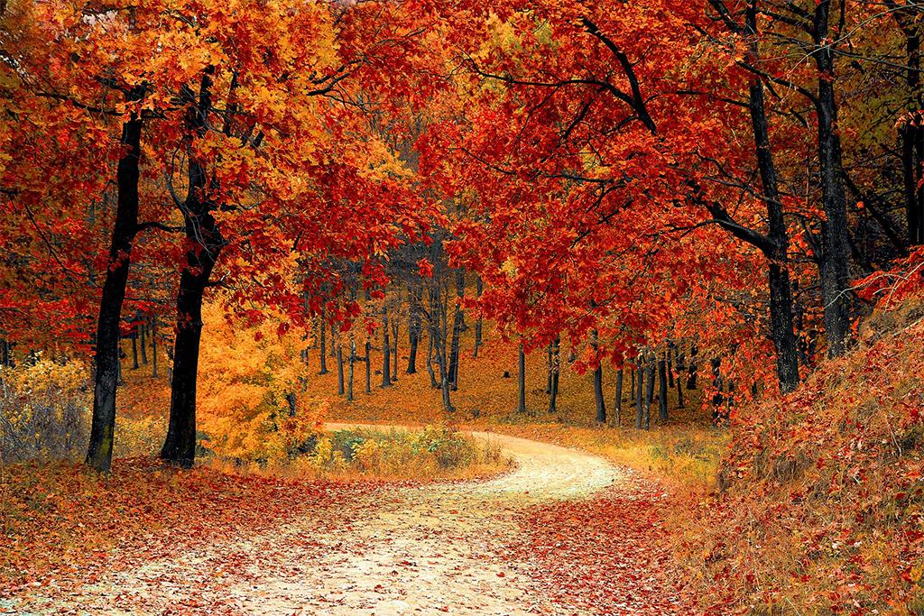 JPEGが苦手な紅葉風景