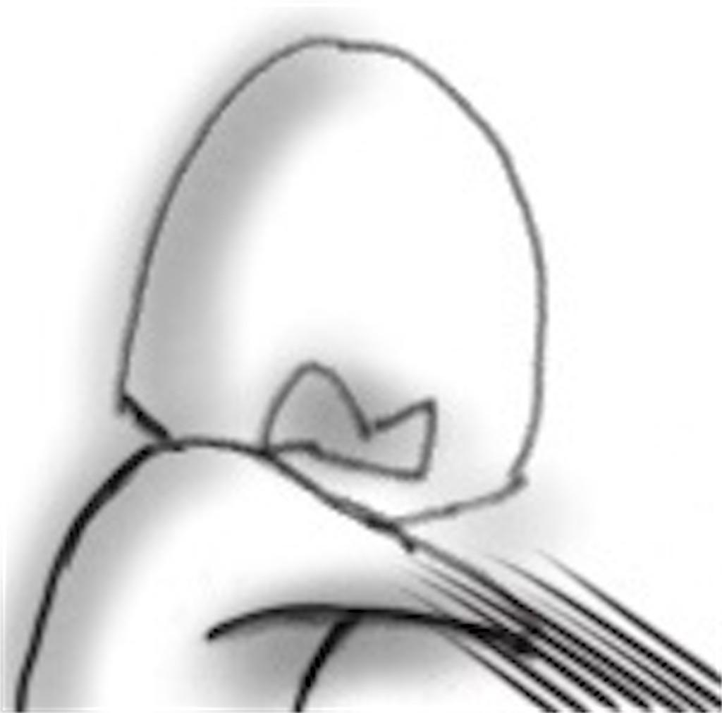 f:id:cumata-tan:20210525203627j:plain