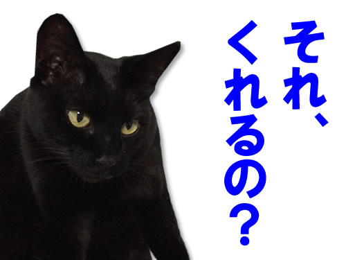 猫 人のご飯を横取りしようとする。