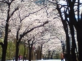 六本木の桜坂