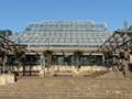 キルステンボッシュ植物園1
