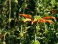 キルステンボッシュ植物園2