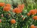キルステンボッシュ植物園5