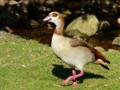 キルステンボッシュ植物園にいた鳥