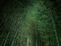 高台寺夜間拝観でライトアップされた竹林