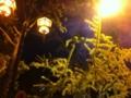 御堂筋の夜