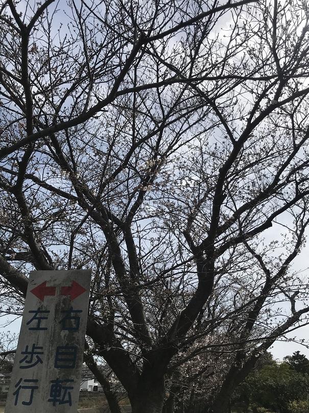 f:id:currysenpaisukisuki:20180324201721j:plain