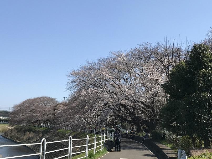 f:id:currysenpaisukisuki:20180325194459j:plain