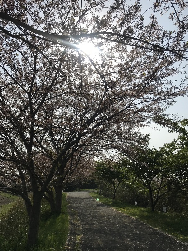 f:id:currysenpaisukisuki:20180405215715j:plain