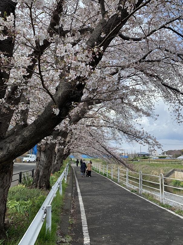 f:id:currysenpaisukisuki:20190402164859j:plain