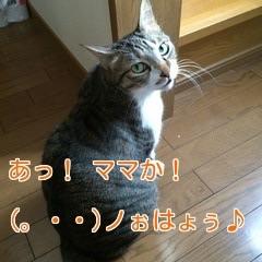 f:id:cutekitten03:20160522161541j:plain
