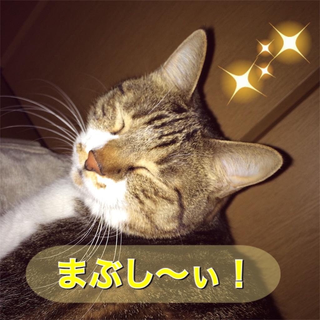 f:id:cutekitten03:20161201200455j:image