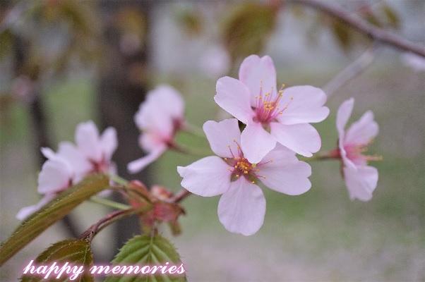 f:id:cyakomomomama:20180403124220j:plain