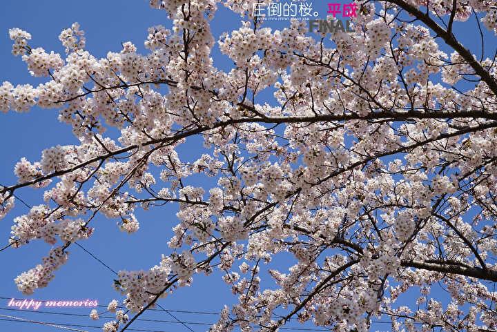 f:id:cyakomomomama:20190517233550j:plain