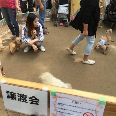 f:id:cycland_nakazawa:20170504172502j:plain