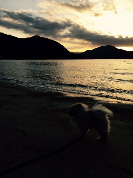 夕焼けと犬の画像