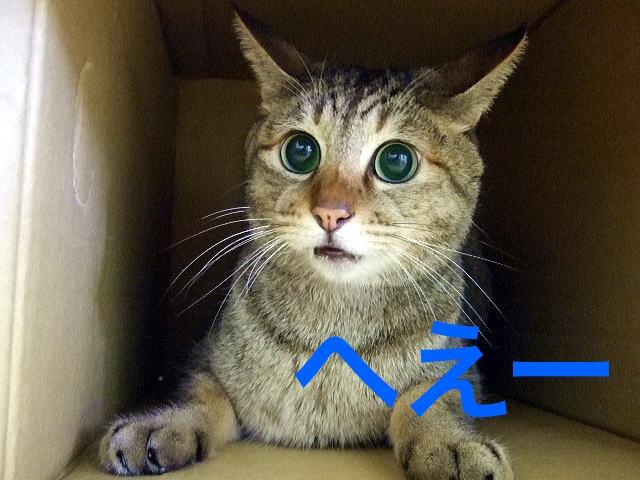 納得する猫の画像